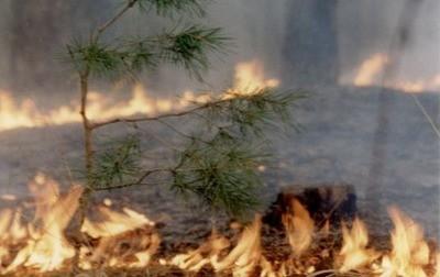 В Челябинской области горит радиоактивный лес