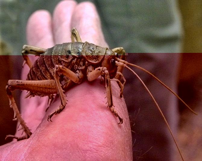 Конец света: мир наводнили гигантские насекомые